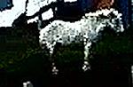 150x97_clothes-horse-c